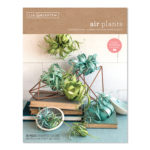 Easy Paper Air Plants